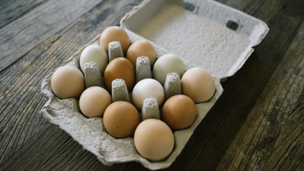 mark-stoops-needs-to-avoid-the-egg-kentucky-football